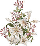 Bunch of lilies and honeysuckle Stock Image