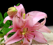 A bunch of Lilies. A bunch of pink Lilies Royalty Free Stock Images