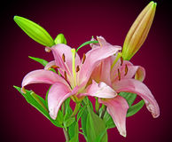 A bunch of Lilies. A bunch of pink Lilies Stock Photo