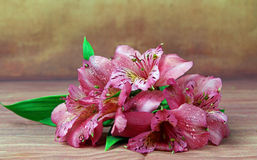 A bunch of Lilies. A bunch of pink Lilies Royalty Free Stock Image