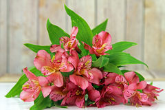 A bunch of Lilies. A bunch of pink Alstroemeria Lilies Stock Images