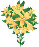 Bunch of lillies Stock Images