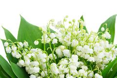 Bunch of Lilly of valley. Close up isolated on white background Royalty Free Stock Images