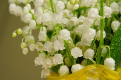 Bunch of lily of the valley Royalty Free Stock Images