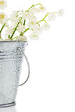 Bunch of lily of the valley in a bucket Royalty Free Stock Images
