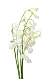 Bunch of lily-of-the-valley flowers on white Stock Photography