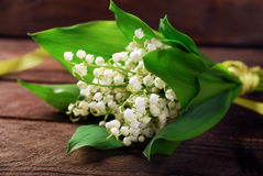 Bunch of lily of the valley Stock Image