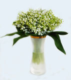 Bunch of the lily of the valleys royalty free stock image