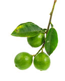 Bunch of limes Stock Image