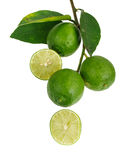Bunch of limes Stock Photo