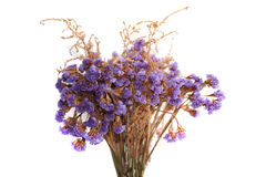 The bunch of limonium flowers isolated on white. Royalty Free Stock Images