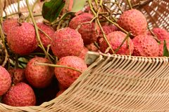 Bunch of litchi. Isolated on white background Royalty Free Stock Photos