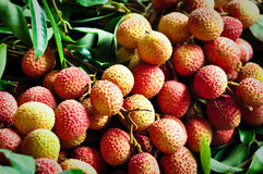 A bunch of litchis. A Tasty colorful bunch of litchis Royalty Free Stock Photography