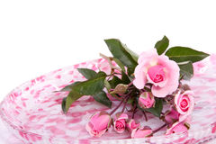 Bunch of little pink roses Stock Photography