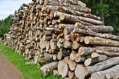 Bunch of logs Stock Image
