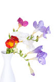 Bunch of lovely freesia isolated on white Royalty Free Stock Photos