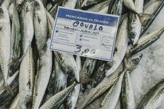 A bunch of mackerel fishes on ice, with a price board in Portuguese language. Mackerel fresh fishes pile at the fish market Royalty Free Stock Image