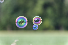 A bunch of magical shining soap bubbles flying over a corn field in front of a wood Stock Photography