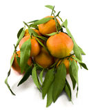 Bunch of Mandarins Stock Image