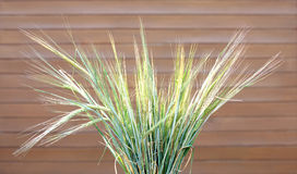 Bunch of many ripe wheat ears over brown wooden wall Royalty Free Stock Photography