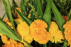 Bunch of marigold and pandanus leaf - flowers for offerings Buddha. Royalty Free Stock Images