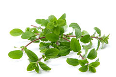 Bunch of marjoram Royalty Free Stock Image