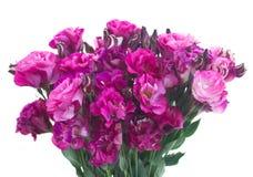 Bunch of  mauve eustoma flowers Royalty Free Stock Image