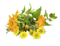 Bunch of medicinal plants isolated Stock Photography