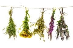 Bunch of medicinal plants on a rope isolated stock photography