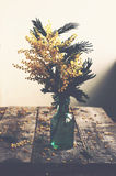 Bunch of mimosa in green bottle on rustic wooden table Royalty Free Stock Images