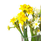Bunch of mini-narcissi Stock Image
