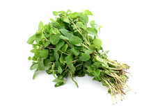 Bunch of mint leaves Stock Images