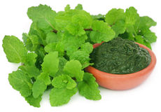 Bunch of mint leaves with ground paste Stock Image