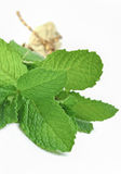 Bunch of mint leaves isolated Royalty Free Stock Photography