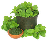Bunch of mint leaves in a mortar with ground paste Royalty Free Stock Photo