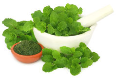 Bunch of mint leaves in a mortar with ground paste Stock Image