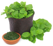 Bunch of mint leaves in a mortar with ground paste Royalty Free Stock Photos