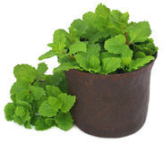 Bunch of mint leaves in a mortar Stock Photography