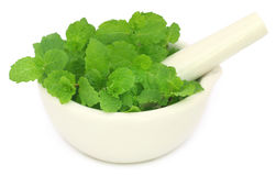 Bunch of mint leaves in a mortar Stock Image