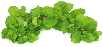 Bunch of mint leaves Stock Photos