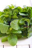 Bunch of mint leaves Stock Photography