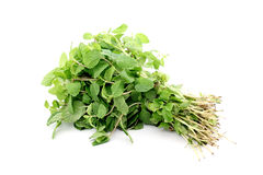 Bunch of mint leaves on white Stock Images