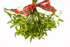 Bunch of mistletoe. Bunch of hanging mistletoe with ribbon isolated on white stock photography