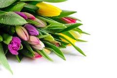 Bunch Mixed Colours Tulips stock photos