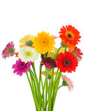 Bunch of mixed gerber flowers Stock Photography