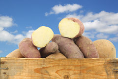 Bunch of mixed sweet potatoes and a cut one in a wooden crate Stock Photography