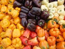 Bunch of Multi-Colored Peppers stock images