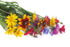 Bunch of multi-colored wild wildflowers isolated Royalty Free Stock Photography