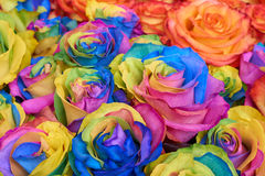 Bunch of multicolored roses Stock Images