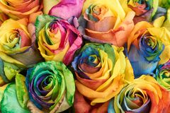 Bunch of multicolored roses Royalty Free Stock Photos